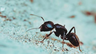 Cenni sulle formiche e metodi di lotta